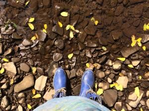 I love a creek.